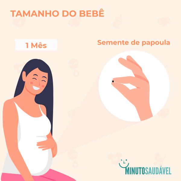 738d49b98 O feto neste primeiro mês de gestação mede, em média, entre 2,5 milímetros  de comprimento e pesa cerca de 2 gramas (como um grão de arroz ou uma  semente de ...