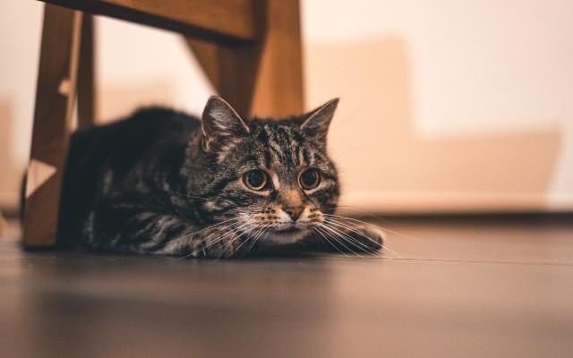 Um gato deitado no chão, embaixo de uma cadeira.