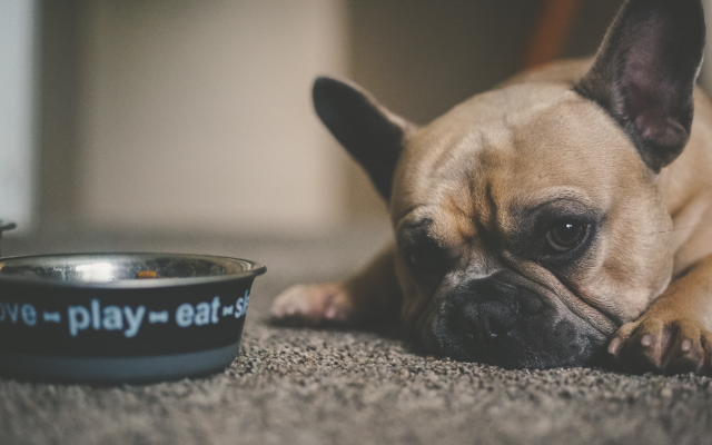Um cachorro deitado no chão ao lado de seu pote de comida.