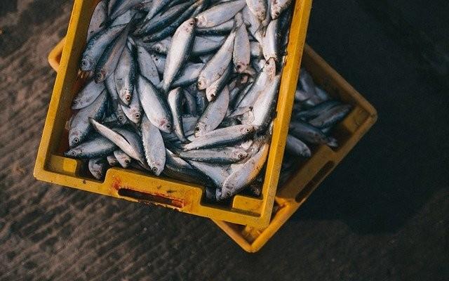 Caixa cheia de peixe.
