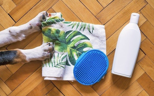 Toalha, shampoo e pente para dar banho em cachorro.