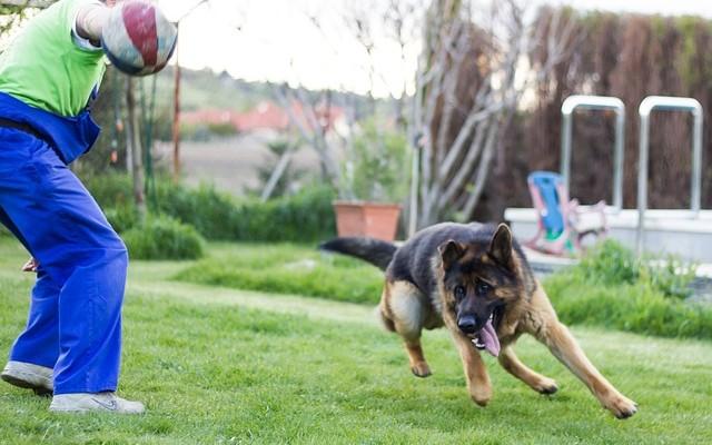 Instrutor treinando cachorro para ser cão-guia.