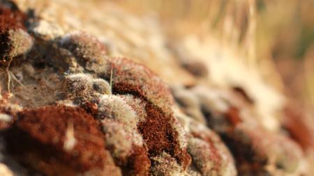 Mucormicose ou fungo negro